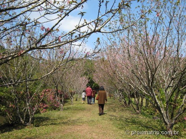 Kinkaku-Ji: réplica do templo japonês em Itapecerica - jardim de cerejeiras