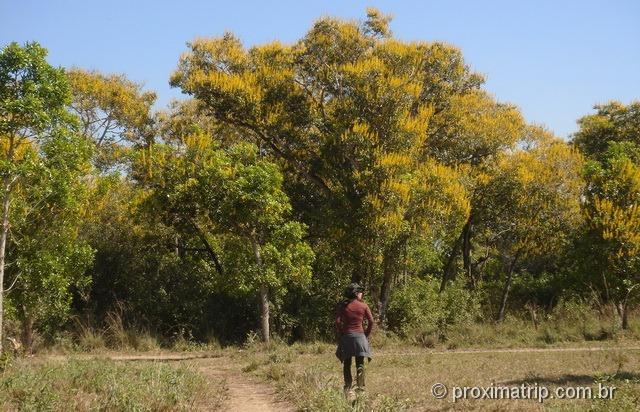 caminhada nos arredores da fazenda Xaraés - Pantanal