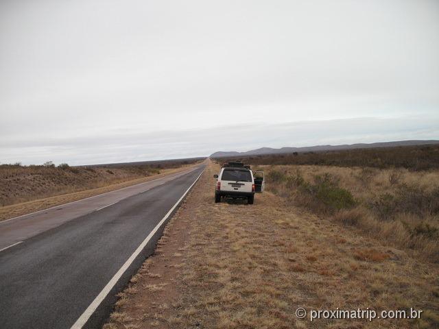 paisagem de gamíneas em estrada argentina