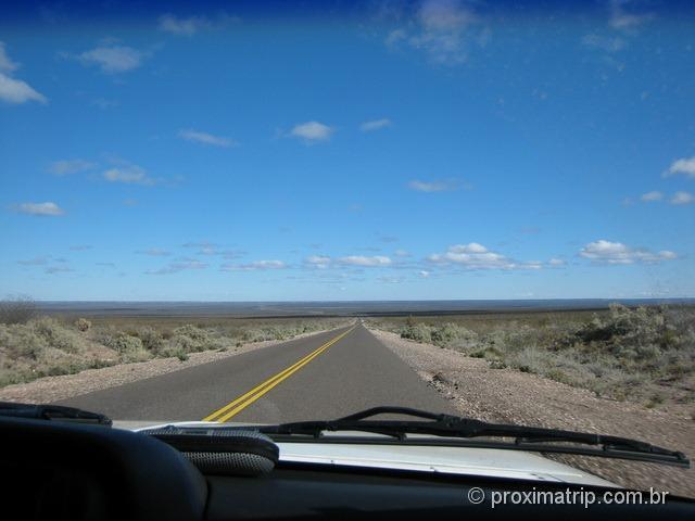 paisagem de gamíneas em estrada argentina - foto 2