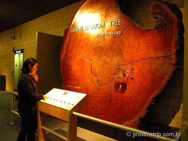 Tronco de sequóia de 2000 anos, desde nascimento de Cristo até hoje - Museu de ciências de Boston
