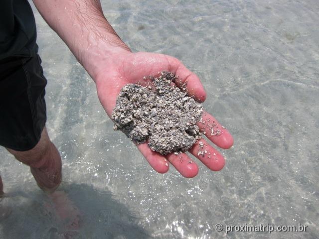 Areia misturada com conchas quebradas da praia de Antunes - Maragogi