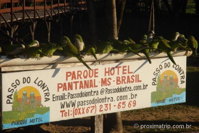 Periquitos - Passo do Lontra Parque Hotel - Pantanal