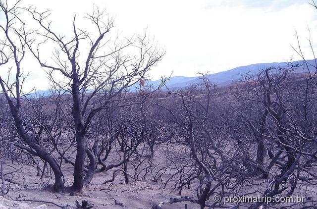 Torres del Paine - incêndio destruiu parte do parque