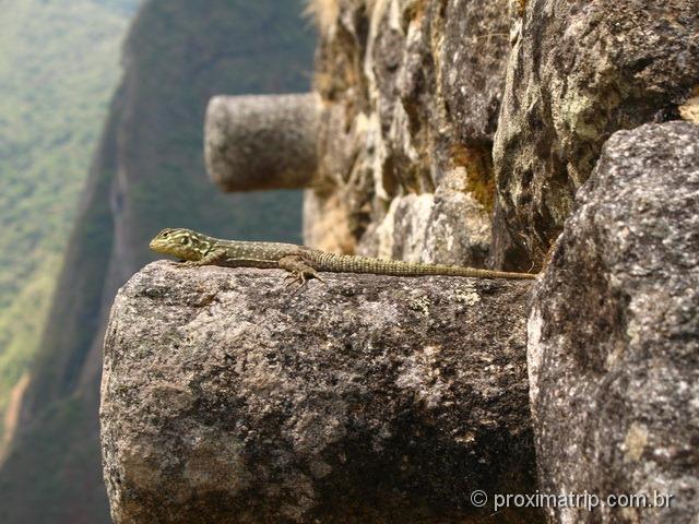 Morador de Machu Picchu!!