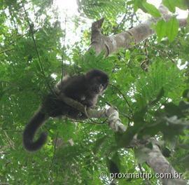 macacos vistos no sendero verde - Cataratas do Iguazú - lado Argentino