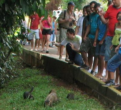 Não alimente os guaxinins- parque nacional do iguaçu