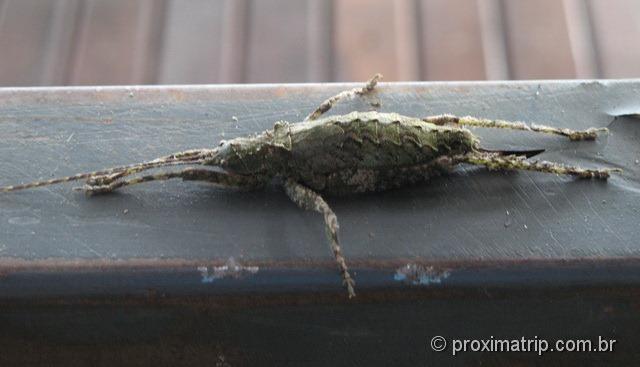inseto sinistro nas cataratas do iguaçu