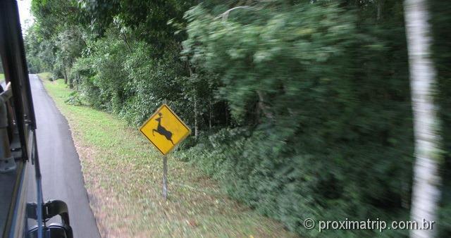 Ônibus parque nacional Foz do Iguaçu - cuidado, animais!