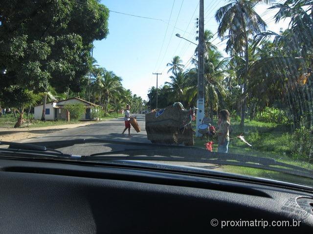 Bumba meu boi na rota ecológica de Alagoas