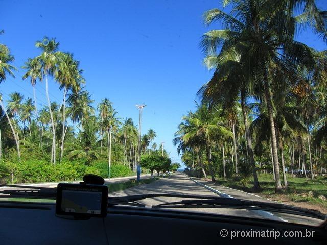 acesso à Praia do Marceneiro - rota ecológica Alagoas
