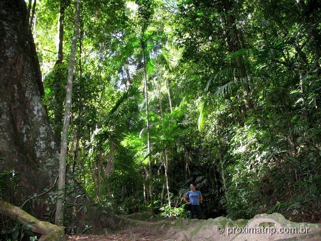 trilha Mozart-Catão, no Parque Nacional da Serra dos Órgãos - foto 3