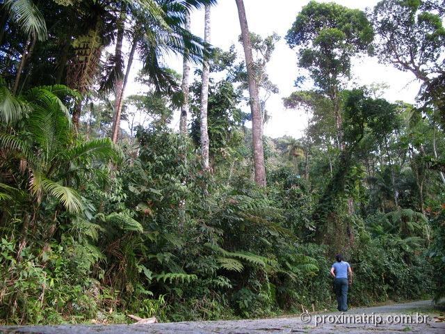 Estrada da barragem, no Parque Nacional da Serra dos Órgãos - foto 2