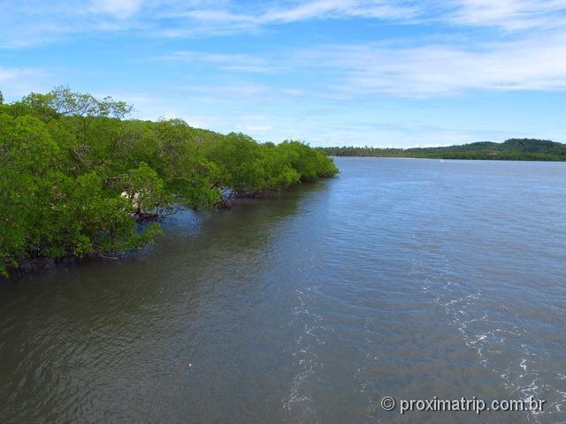 Passeio do Catamarã Cavalo Marinho - manguezal