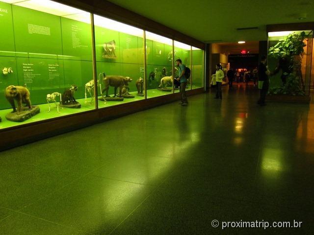Primatas e Mamíferos Africanos - Museu de História Natural de Nova York
