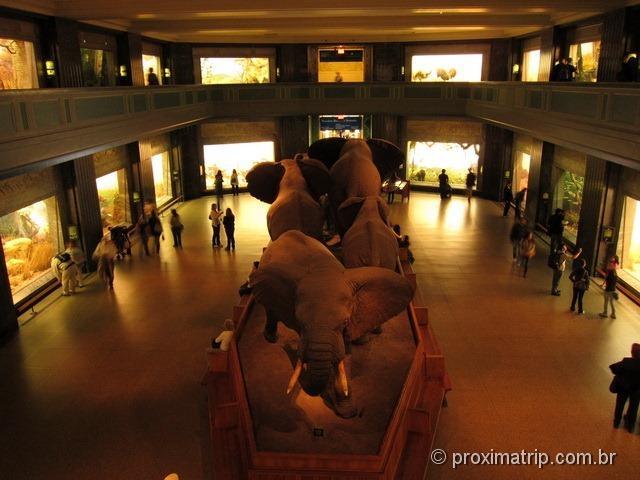 Manada de Elefantes em tamanho real no Museu de História Natural - Nova York
