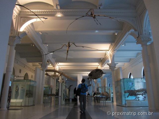 repteis voadores - Museu de História Natural - Nova York