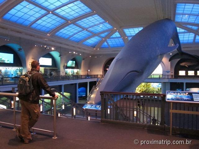 Baleia Azul - Museu de História Natural - Nova York