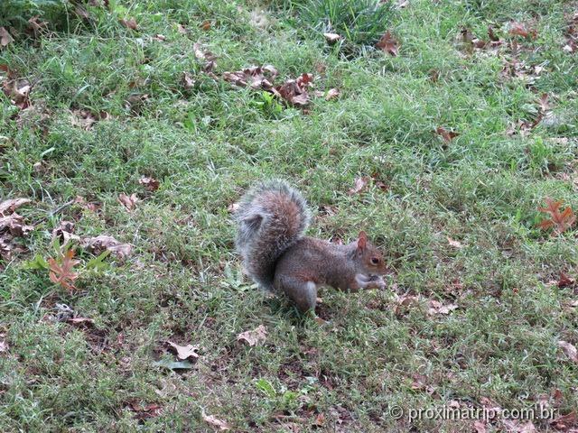 esquilo em Nova Iorque
