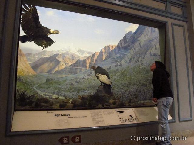 Condores no Museu de História Natural - Nova York