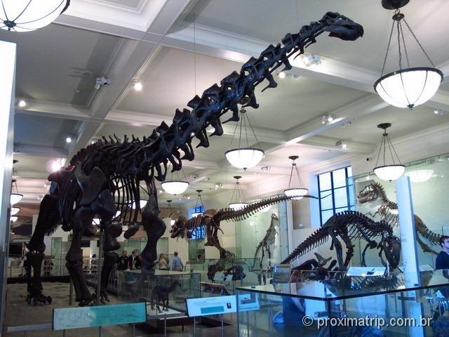 Dinossauro com pescoço gigante - Museu de História Natural - Nova York