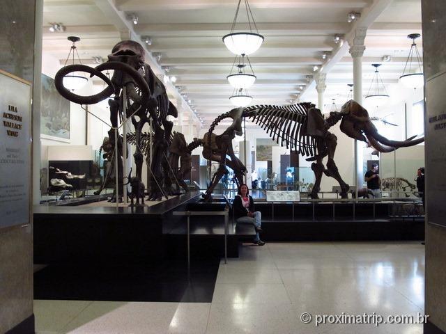 Mamutes - Museu de História Natural - Nova York