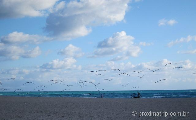 Gaviotas - Miami South Beach