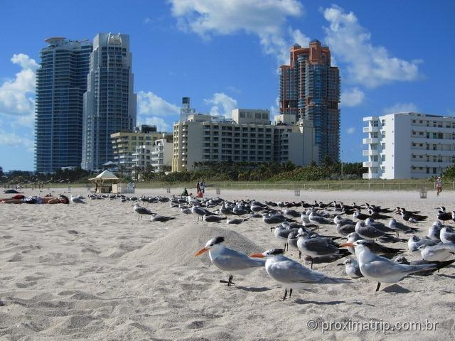 """""""Esquadrilha"""" de Gaviotas - Miami South Beach"""