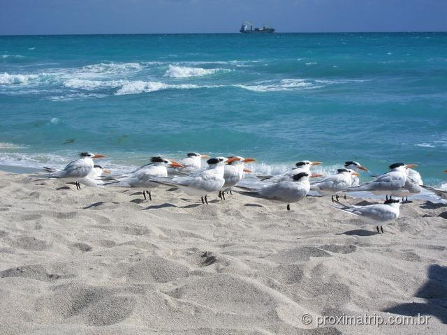 Gaviotas na praia em Miami - South Beach