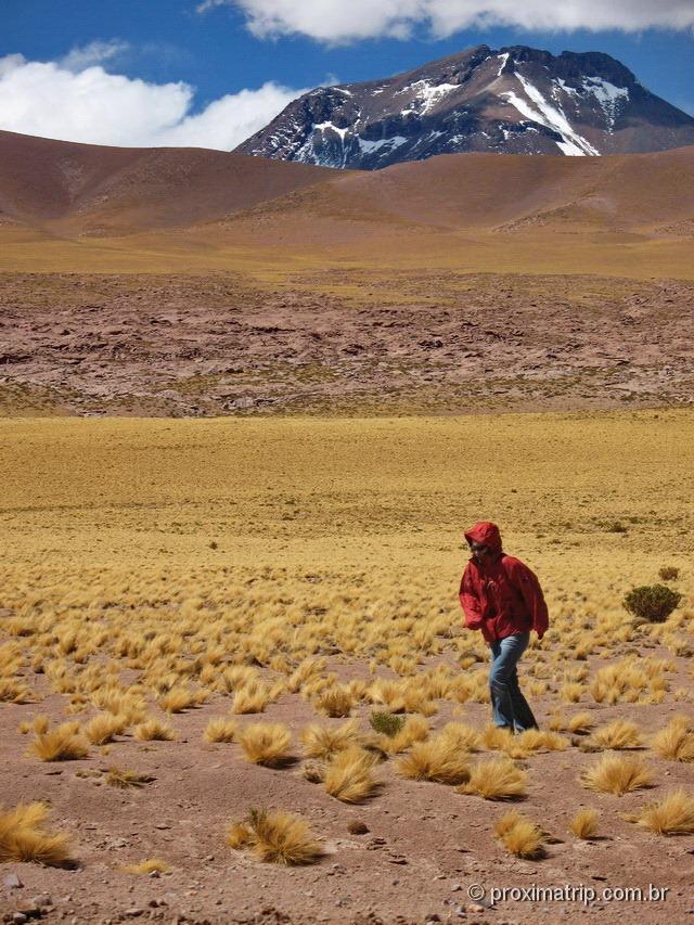 Linda paisagem de altitude - pastagens amarelas - deserto do Atacama