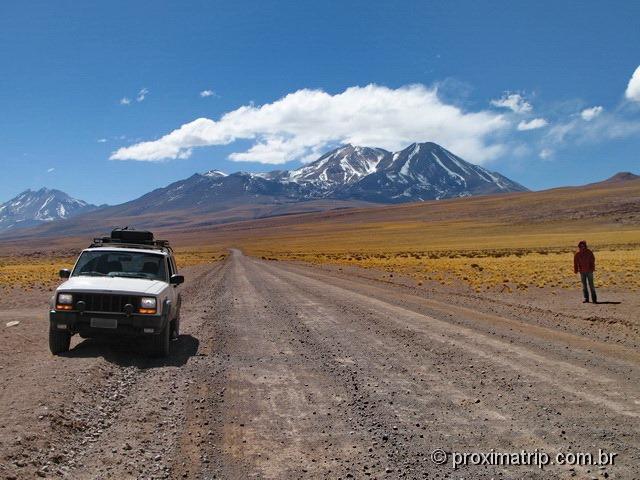 as belas pastagens amarelas de altitude - paisagem altiplanica - deserto do Atacama