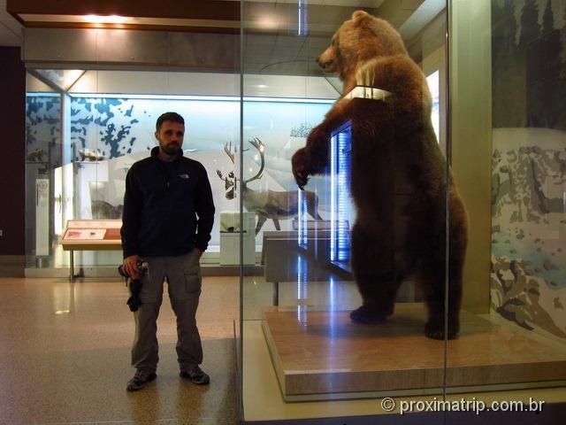 Urso empalhado tamanho real Museu de História Natural Washington DC Smithsonian
