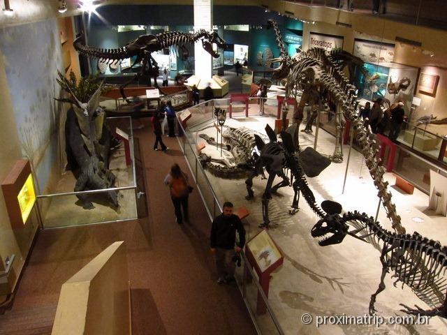 Esqueletos Dinossauros Museu de História Natural Washington DC Smithsonian