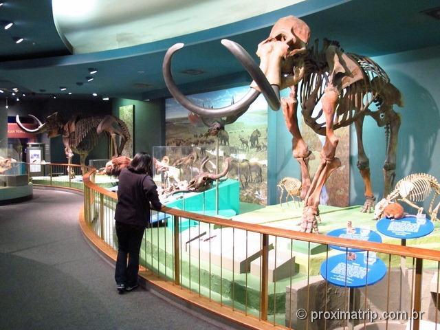 Esqueleto de Mamute Museu História Natural Washington DC (Smithsonian)