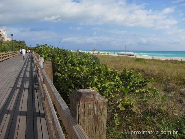 Grande plataforma madeira caminhada cooper Miami beach