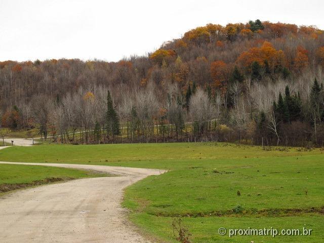 Árvores de outono na linda do Parc Omega - Canadá
