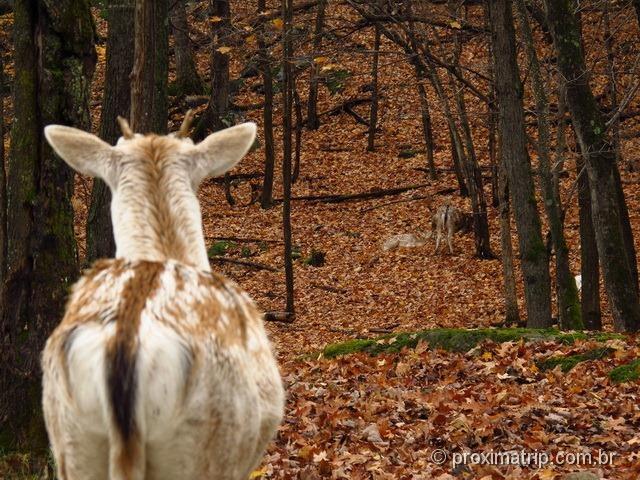 Animais no Parc Omega - Canadá