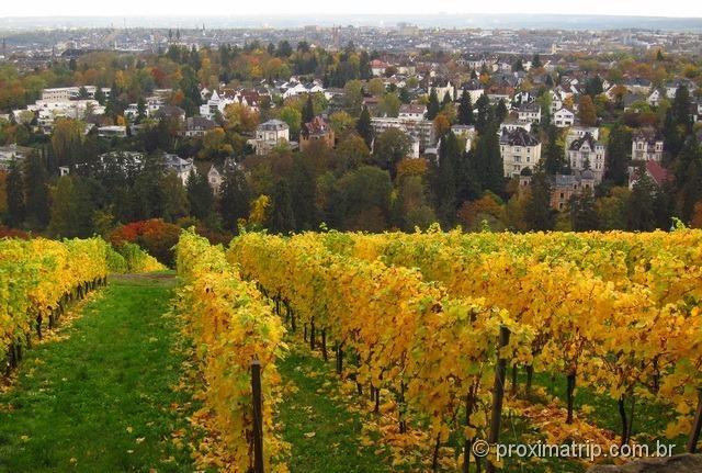 vinhedo de Neroberg e a cidade de Wiesbaden ao fundo