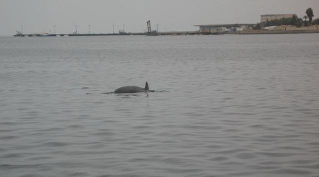 Golfinho visto no Tour às Islas Ballestas