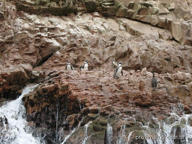 Pinguins vistos no Tour às Islas Ballestas