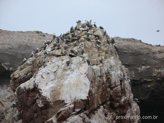 Aves, muitas aves - Islas Ballestas