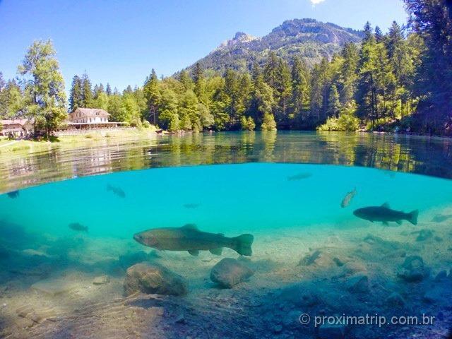 Godome & Gopro - Trutas no Lago Blausee - Suiça no verão