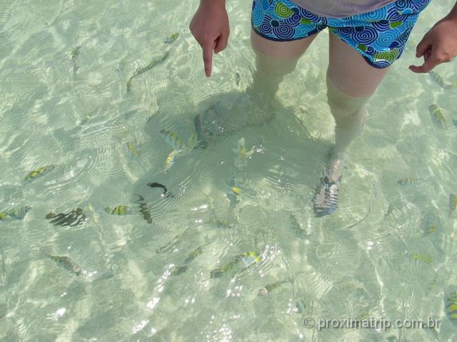 Peixinhos na Praia de Ponta de Mangue, em Maragogi