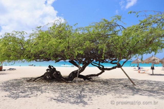 Árvore Divi-divi símbolo de Aruba