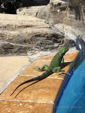 Iguana tomando sol ao lado da piscina