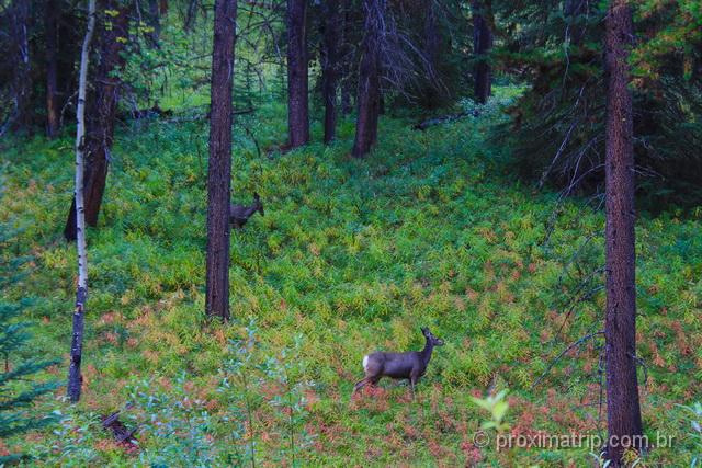 O que fazer em Banff: Vida Selvagem