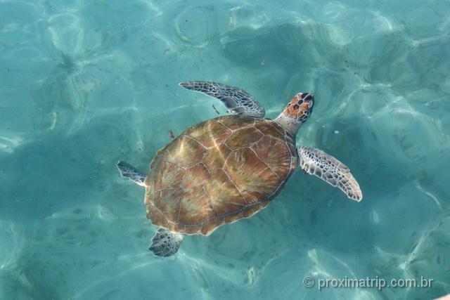 Tartaruga marinha em Curaçao