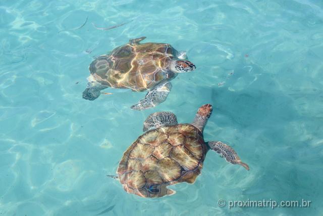 Tartarugas marinhas em Curaçao