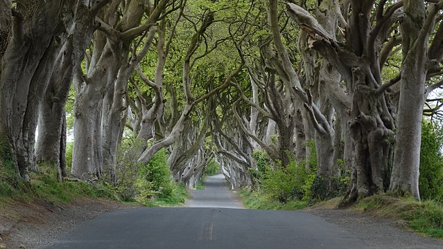 crédito da imagem: Colin Park / Dark Hedges near Armoy, Co Antrim / via wikipedia