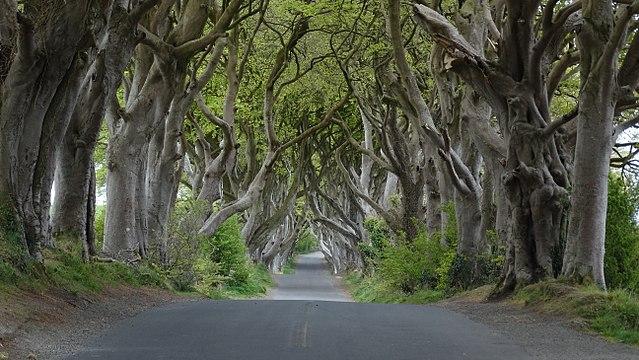 crédito da imagem:Colin Park/Dark Hedges near Armoy, Co Antrim/ via wikipedia